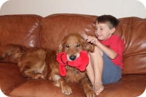 Golden Retriever Dog for adoption in Roanoke, Virginia - Riley