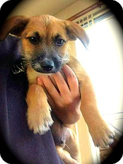 Terrier (Unknown Type, Medium) Mix Puppy for adoption in Cypress, California - Mater
