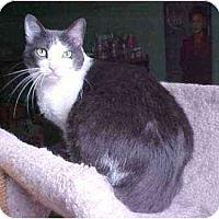 Adopt A Pet :: Gemma (hold me!) - Portland, OR
