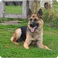 Adopt A Pet :: Drake - Hamilton, MT