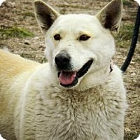 Adopt A Pet :: Pandora - Cheyenne, WY