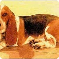 Adopt A Pet :: Noni - Phoenix, AZ