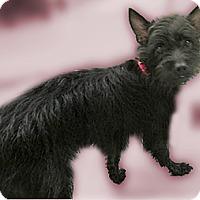 Adopt A Pet :: Hershey girl - Sacramento, CA