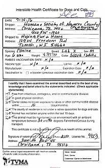 Labrador Retriever Puppy for adoption in Tomah, Wisconsin - Ace
