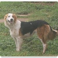 Adopt A Pet :: Princess - Lebanon, CT