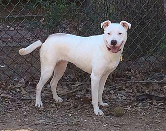 Labrador Retriever Mix Dog for adoption in Acworth, Georgia - Kylie