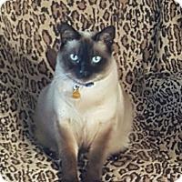Adopt A Pet :: Samauri (Sami) - Laguna Woods, CA