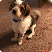Adopt A Pet :: Charlie pending adoption - East Hartford, CT