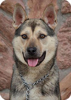 Husky Mix Dog for adoption in Los Angeles, California - Thomas von Theobold