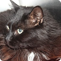 Adopt A Pet :: AVA - Clayton, NJ
