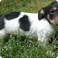 Adopt A Pet :: Milo - Manning, SC