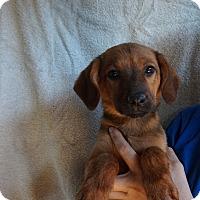 Adopt A Pet :: Carmel - Oviedo, FL