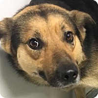 Adopt A Pet :: Chandler - Lincolnton, NC