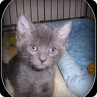 Adopt A Pet :: KC - South Plainfield, NJ