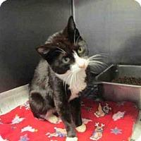 Adopt A Pet :: GAIL - Rockford, IL