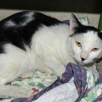 Adopt A Pet :: Gouda - Westville, IN