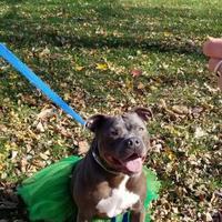 Adopt A Pet :: Sasha - Davenport, IA
