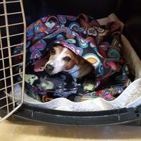 Adopt A Pet :: ChaChi - Hastings, MN