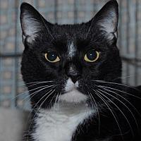 Adopt A Pet :: Aggie - Jaffrey, NH