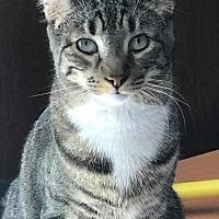 Adopt A Pet :: Johanna - Philadelphia, PA