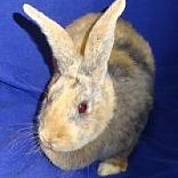 Adopt A Pet :: Elise - Woburn, MA