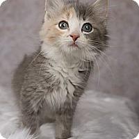Adopt A Pet :: Clarabelle - Eagan, MN