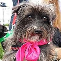 Adopt A Pet :: Dutchess - San Dimas, CA