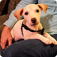 Adopt A Pet :: Lily Bug - Middlesex, NJ