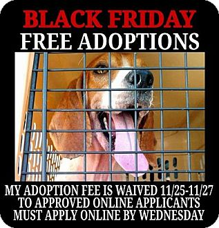 Beagle Mix Dog for adoption in Cincinnati, Ohio - Yoda- WAIVED FEE
