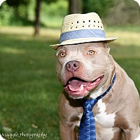 Adopt A Pet :: Frankie - Davison, MI