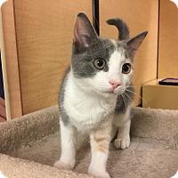 Adopt A Pet :: Pip - Jackson, NJ