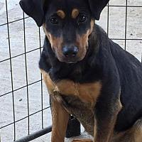 Adopt A Pet :: Nikita - Del Rio, TX