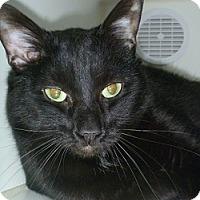 Adopt A Pet :: Nallah - Hamburg, NY