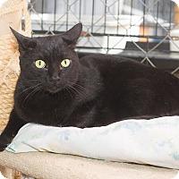 Adopt A Pet :: Thor - Fallbrook, CA