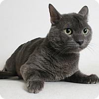 Adopt A Pet :: Smokey - Redding, CA