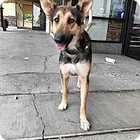 Adopt A Pet :: Candy - Livermore, CA