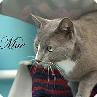 Adopt A Pet :: Mae - Middleburg, FL
