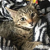 Adopt A Pet :: Doug - Bonsall, CA