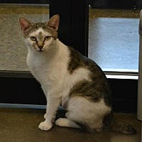 Adopt A Pet :: Otter - Akron, OH