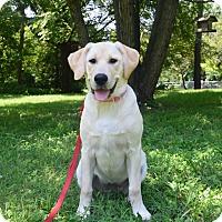 Adopt A Pet :: Ursa - Franklin, TN