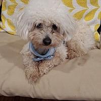 Adopt A Pet :: Bentley - Alpharetta, GA