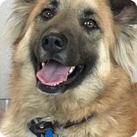 Adopt A Pet :: Henri - Milton, GA