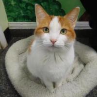 Adopt A Pet :: Katie - Norfolk, VA