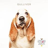 Adopt A Pet :: Gulliver - Houston, TX