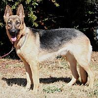 Adopt A Pet :: Corri A. - Sacramento, CA