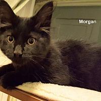Adopt A Pet :: Morgan - Portland, OR