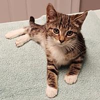 Adopt A Pet :: Sammy - Palo Alto, CA
