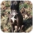 Photo 1 - Labrador Retriever/American Pit Bull Terrier Mix Dog for adoption in Yuba City, California - Anya