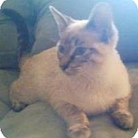 Adopt A Pet :: Somi - Miami, FL