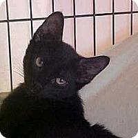 Adopt A Pet :: Luke - Lunenburg, MA
